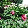 Dans le jardin de mes parents...