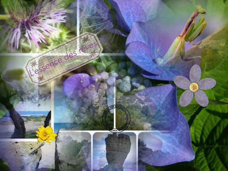 collage_2012-06-01_13-49-53