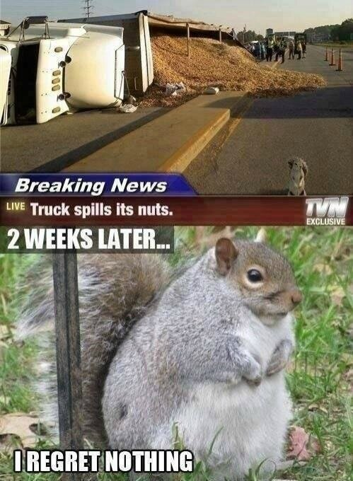 truck-spills-nuts-funny-fat-squirrel-meme