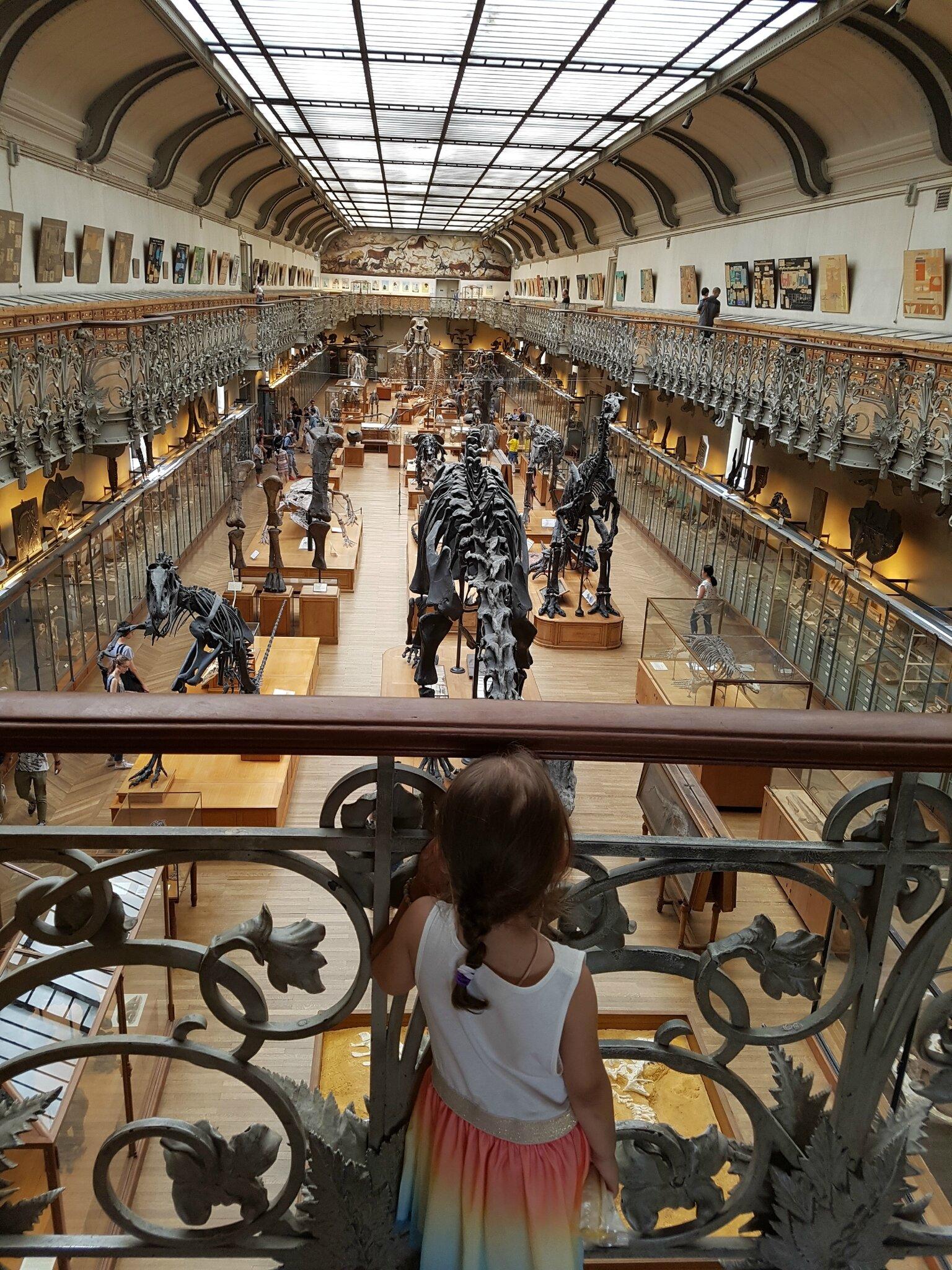 A la Galerie de Paléontologie et d'Anatomie comparée