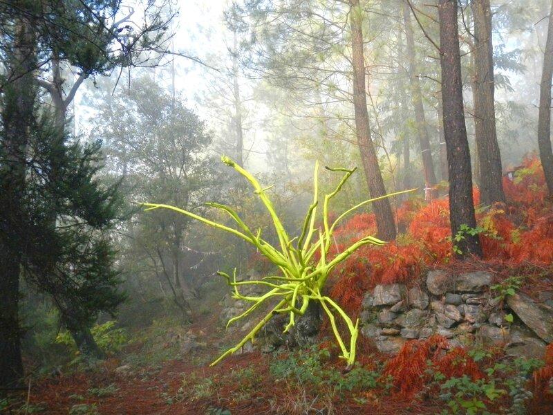 land-art bouquet de branches dans la brume yurtao
