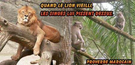 proverbemarocain_lion_singes