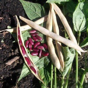haricots rouges sombrero
