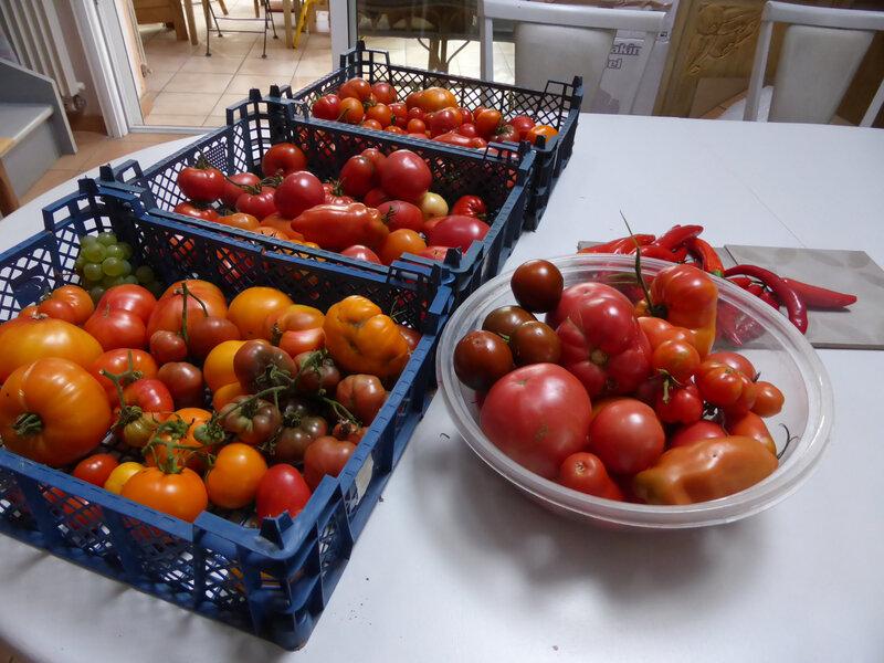 11-tomates (1)