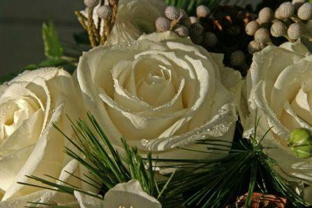 rose blanche pour alexis d'adrienne lopez n
