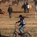 Le vélo au milieu des chevaux