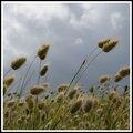 Flore du bord de mer....