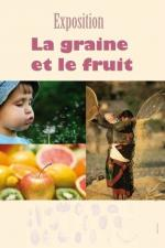 graine-fruit-1