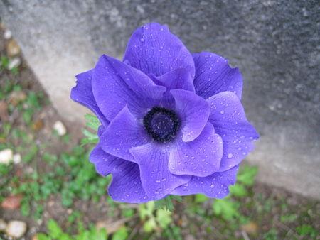 jardin_octobre_003