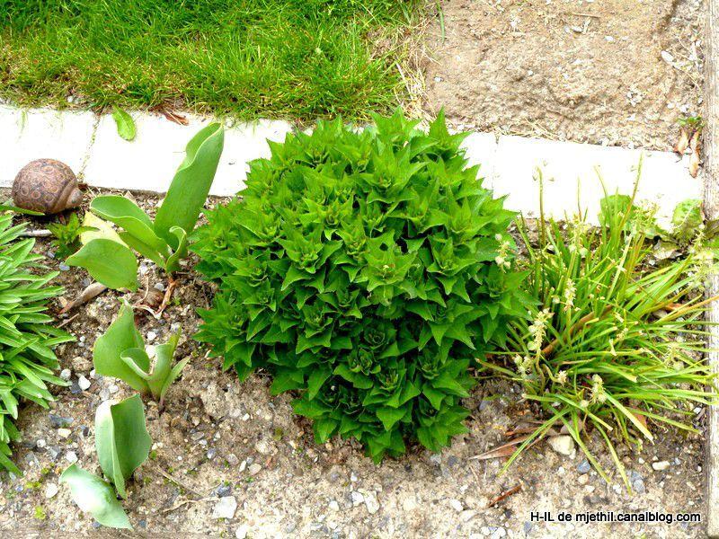 10-Jardin 8 mai 2012 012