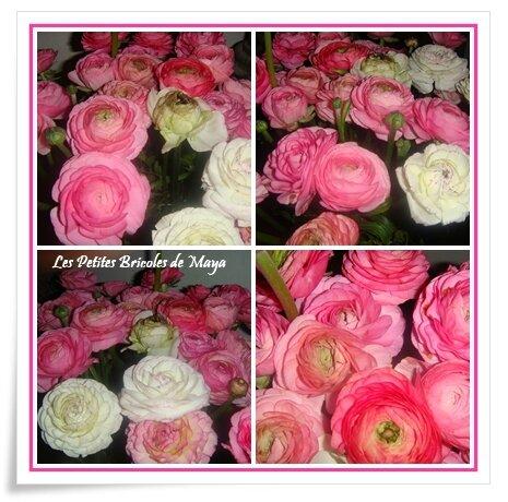 Renoncules roses
