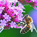abeille au boulot