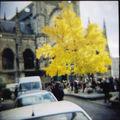 Un arbre jaune