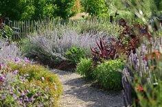 Buisson herbes