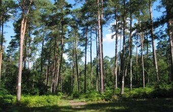 foret de marcilly