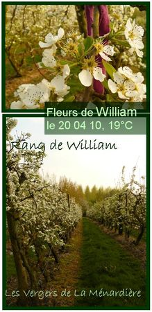 william_2004