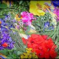 Stage Découverte plantes sauvages et comestibles