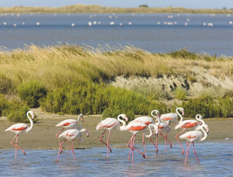 468870-flamants-roses-marais-camargue