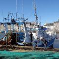 Cherbourg - port de pêche