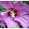 Fleurs de mon jardin 30