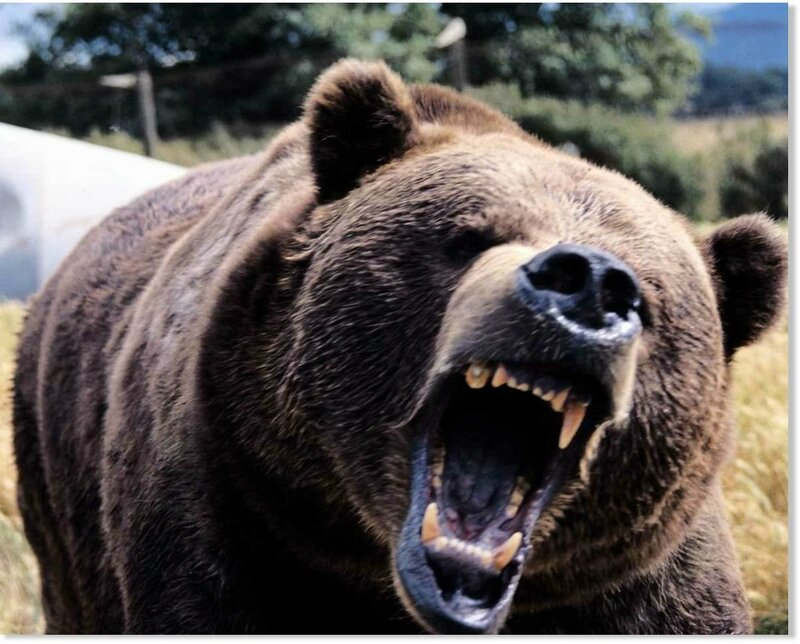 ours terrifiantscary_angry_bear