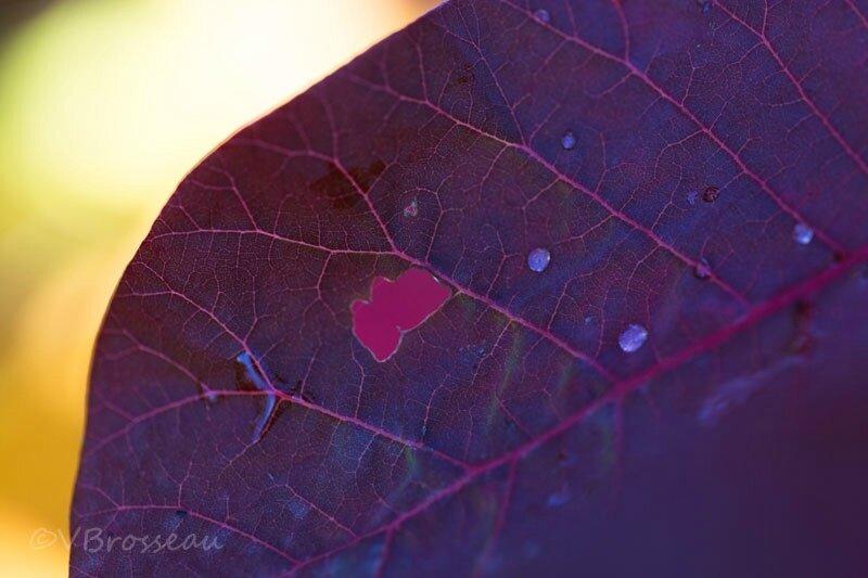 feuilles-automne17-02