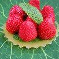 Tarte aux fraises sans pâte