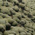 Champ de lave de l'Eldhraun, recouvert de lichen.