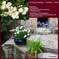 Roses anciennes orléanaises : 'Yvonne rabier'