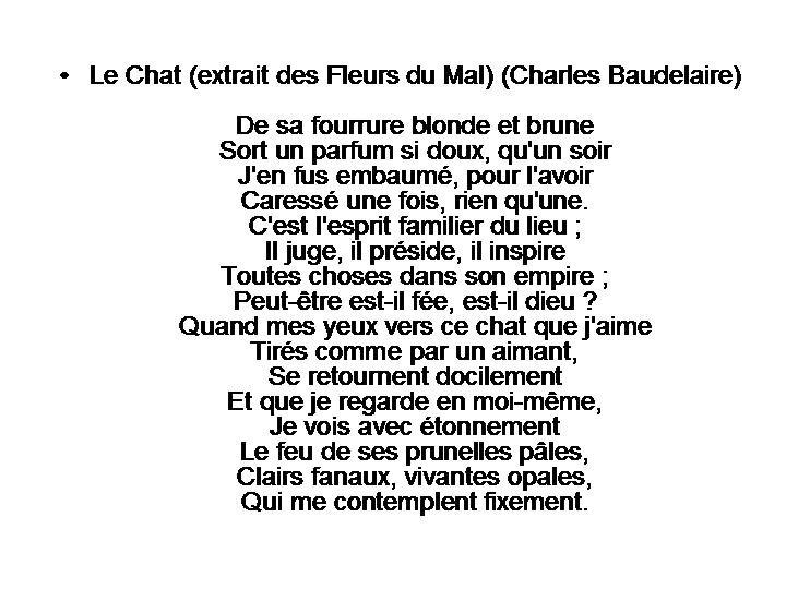 RONDE DES CHATS (116)