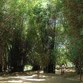 cubbon park, mai 2007 (25)