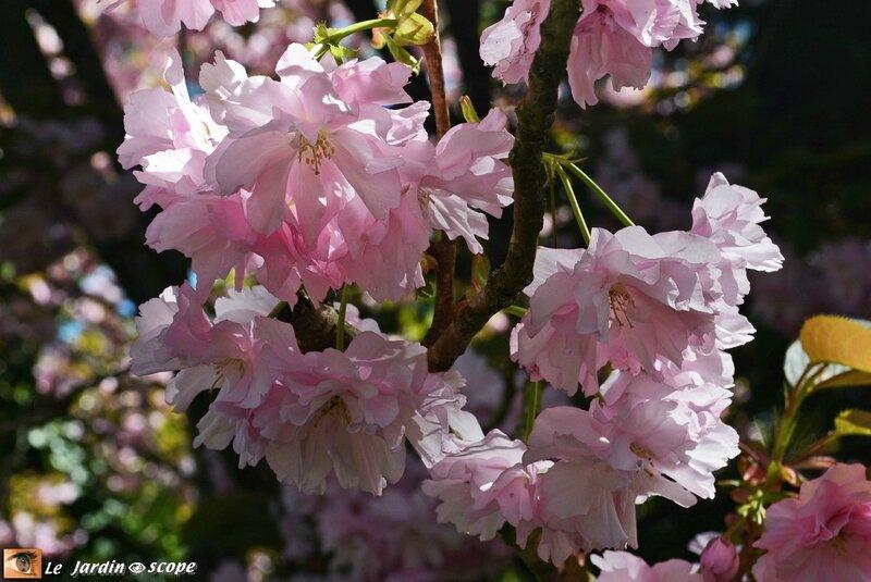 Parc-Floral-1c
