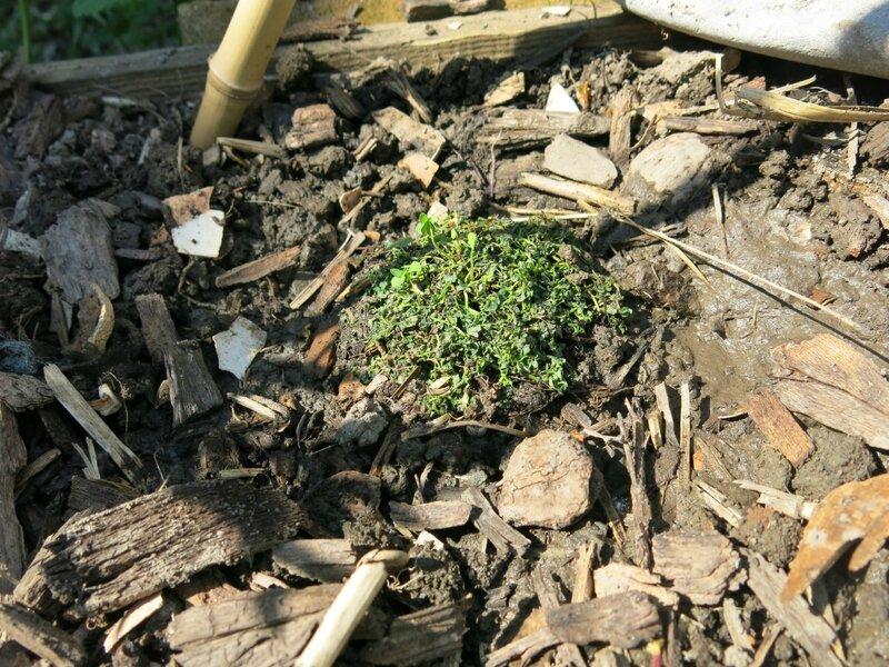 Nouveaux jardiniers entretien et jardinage le for Entretien concombre jardin
