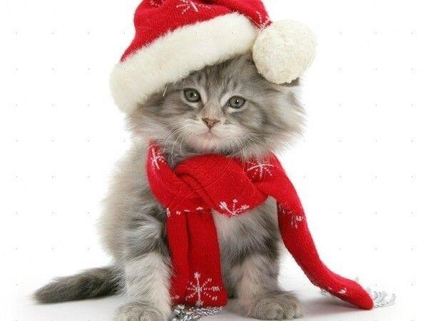 911348df6557cc058c53bbf0142fbaa3--mimi-christmas-cats