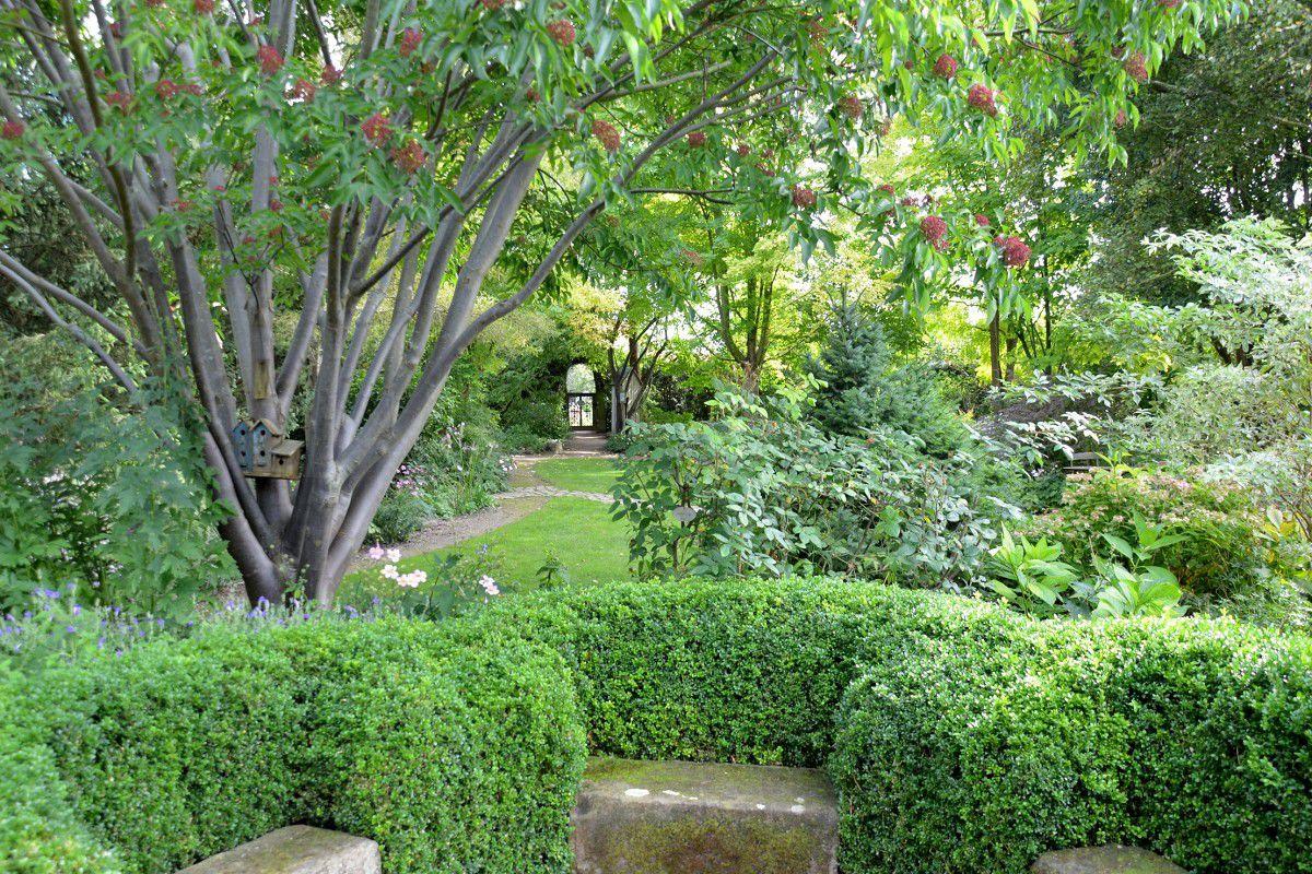 L 39 arbre miel rouge garance for O jardin des beautes