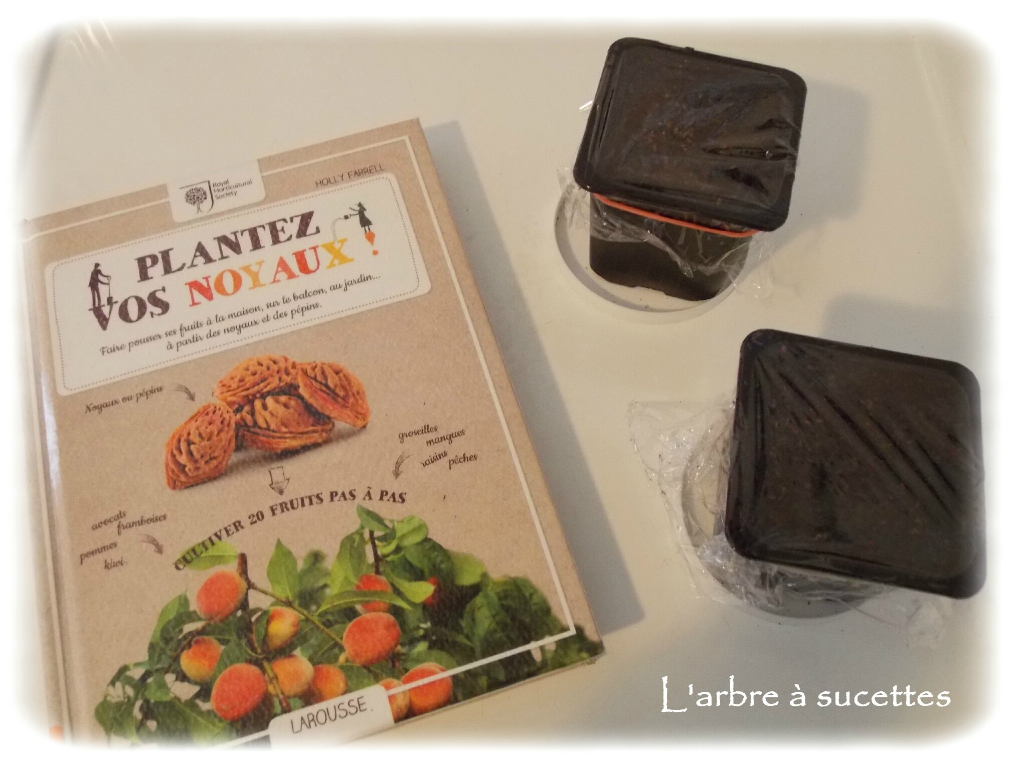 activit enfant 6 mercredi graines de kiwi l 39 arbre sucettes. Black Bedroom Furniture Sets. Home Design Ideas