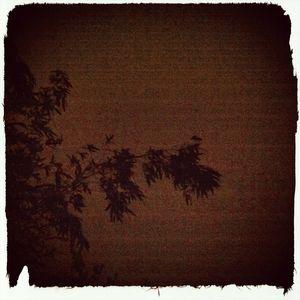 Prose nocturne