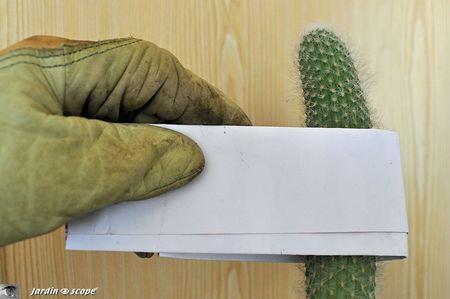 Comment-dépoter-un-cactus
