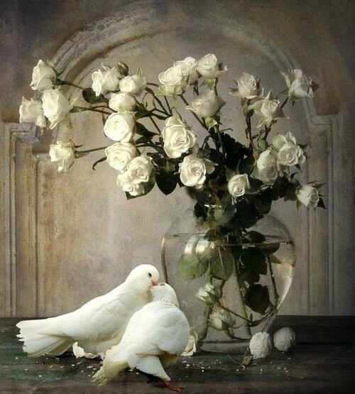 Love Dove Beautiful Wallpaper : Romantisme... - La Dame aux roses