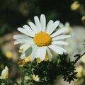 fleurs_19