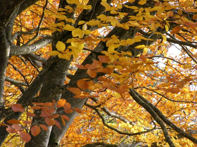 automne7