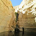 Les sources du Wadi Neqarot