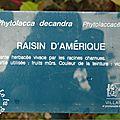 Copie de DSC08073