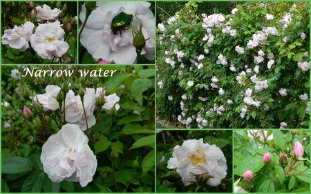 narrow water