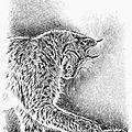 Lynx boréal chasse rongeur