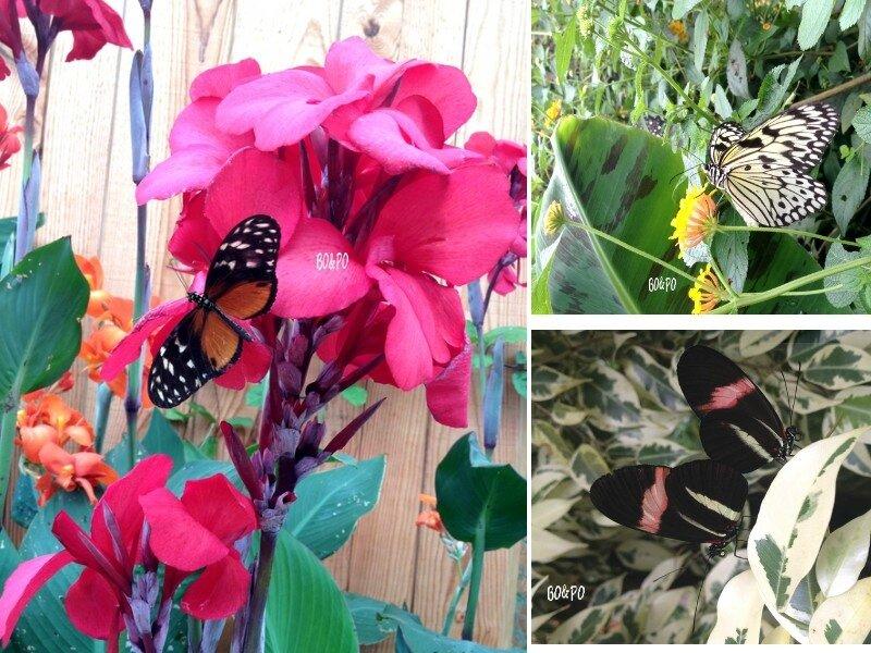 ile aux papillons 2