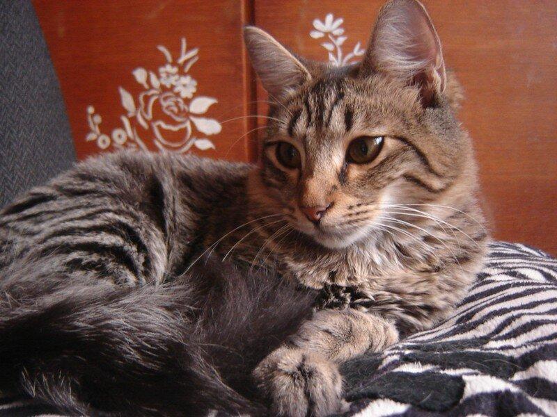 Portrait Asia