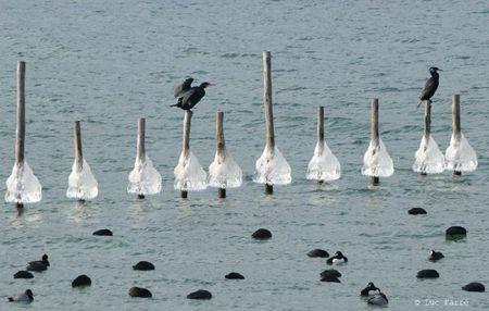 oiseaux gel-189