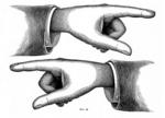 handsimage[1]