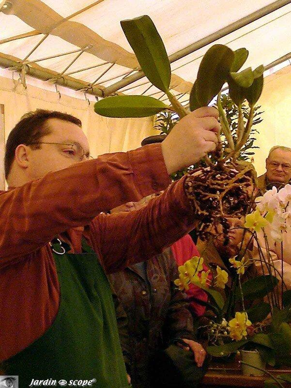 Atelier de conseils de culture, refloraison et rempotage d'Orchidées